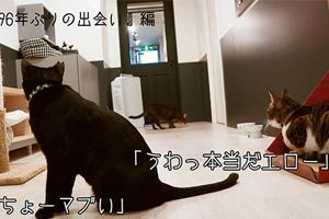 96猫、「クズの本懐」OPテーマ、CM SPOT特別編がWEB限定公開!